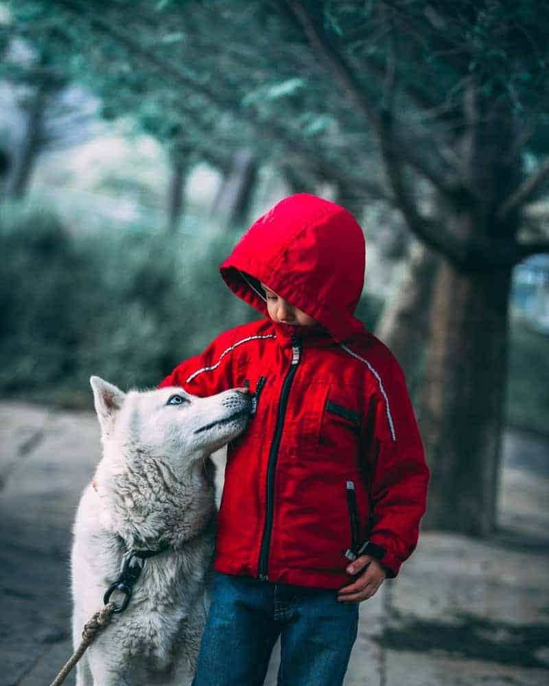 boy with a wolf